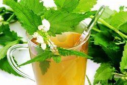 Польза чая из крапивы