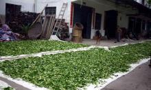 Производители зеленого чая (страны)
