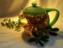 Эвкалиптовый чай - рецепты, польза, способ приготовления