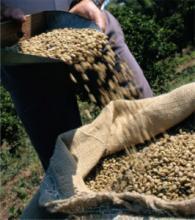 Обработка кофе влажным способом